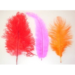Chicks feather