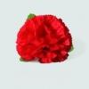 Carnation flower clip